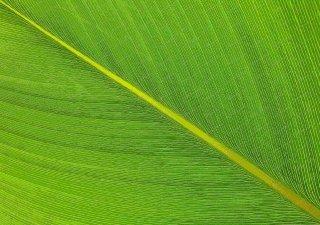 green-leaf-kl-malaysia