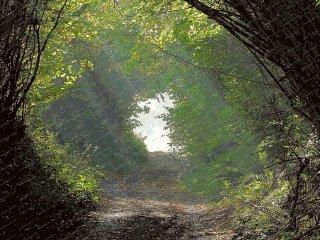 misty-morning-church-lane-dorset