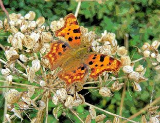 comma-in-autumn