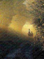 misty-morning-exercise