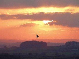 sunset-over-vale-hartgrove-dorset_2