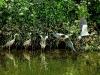 heron-taking-to-flight-river-avon