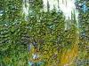 misc-birch-scape