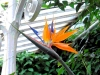 ni-bird-of-paradise-flower-belfast