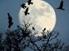 rookery-moon-hartgrove-dorset