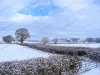 snow-hopton-heath-6058