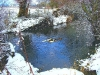 snow-river-clun-with-ducks