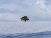 snow-tree-on-hill