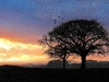 sunset-church-lane-6800-pan-hartgrove-dorset_1