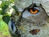 totem-knight-owl